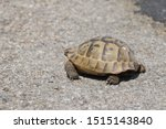 Stock photo very cute tortoise is walking on the road 1515143840
