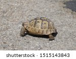 Stock photo very cute tortoise is walking on the road 1515143843