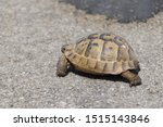 Stock photo very cute tortoise is walking on the road 1515143846