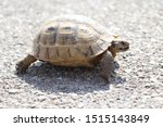 Stock photo very cute tortoise is walking on the road 1515143849
