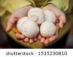 Woman Holding Mushrooms. The...