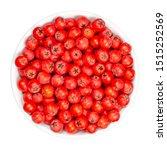 european rowan fruits in white... | Shutterstock . vector #1515252569
