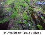 Green Moss Born On A Rock Is A ...