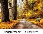 Golden Autumn  Path In Forest
