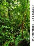 tropical rainforest landscape ... | Shutterstock . vector #151566884