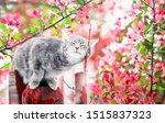 Cute Tabby Cat Walking On The...