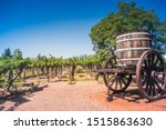 Vineyards in the province of Mendoza in Argentina.