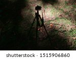 Small photo of Shadow of a camera on a tripod projected onto the forest floor by the setting sun. Under exposed to exaggerate the pool of light and the darkness of the forest.