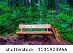 Forest wooden bench scene....