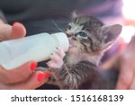 Stock photo little gray kitten drinks milk from a bottle feeding kittens without a nursing cat kittens on 1516168139
