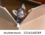 Stock photo little one month old kitten climbs out of a huge box gray kid kitten in a paper box 1516168289