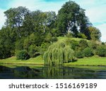 Weeping Willow And Other Trees...