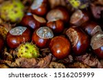 A Group Of Conkers From The...