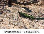 lizard reptile   Shutterstock . vector #151628573