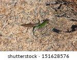 lizard reptile   Shutterstock . vector #151628576