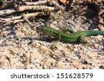 lizard reptile   Shutterstock . vector #151628579
