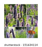 Small photo of Agastache tea collage