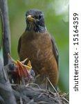 robin and babies | Shutterstock . vector #15164359