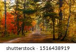 Autumn Forest. Trees Are...
