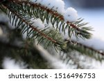 Small photo of Spruce tree branches with plenty of heave snow on them. Photographed during a winter day in Finland. Lovely Northern nature with fresh and cold air. Closeup color image.