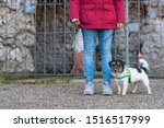 Stock photo woman is walking with a small obedient jack russell terrier dog resting at a grotto with a saint 1516517999