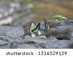 Image Of A Monarch And A...