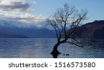 Wanaka Tree During Winter Time