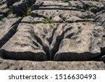 Tree Carved Into Limestone...