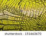 Yellow alligator patterned...