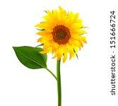 Sunflower Vector Flower Pedicl...
