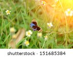"Small photo of Butterfly name ""Blue Pansy"" on a grass flower. (Jononia orithya wallacei (Distant))"