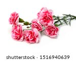 A Long Pink Carnations On White ...