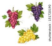 different varieties of grapes ... | Shutterstock .eps vector #151720190