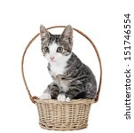 Kitten In A Basket On A White...