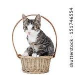 Kitten In A Basket On A White...
