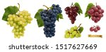 wine grapes  table grapes.... | Shutterstock .eps vector #1517627669