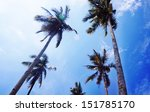 palm trees on the background of ... | Shutterstock . vector #151785170