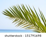 Palm leaf abstract background - stock photo