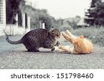 Stock photo cats playing game 151798460