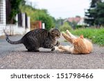 Stock photo cats playing game 151798466
