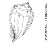vector summer beach seashell... | Shutterstock .eps vector #1518073409