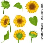 The Set Of Sunflowers With...