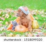 Puppy In A Warm Hat Sitting...