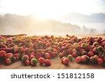 Strawberry In Fog