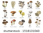 Hand Drawn Colorful Mushrooms...