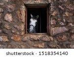 A Horse Looks Out Through A...