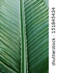 tropical leaf texture  full... | Shutterstock . vector #151845434