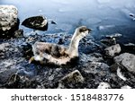 Bird Stuck In Polluted Water...