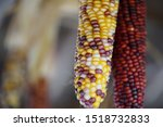 Multicolored Corn Kernels Clos...