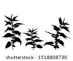 nettle silhouette illustration. ... | Shutterstock .eps vector #1518808730